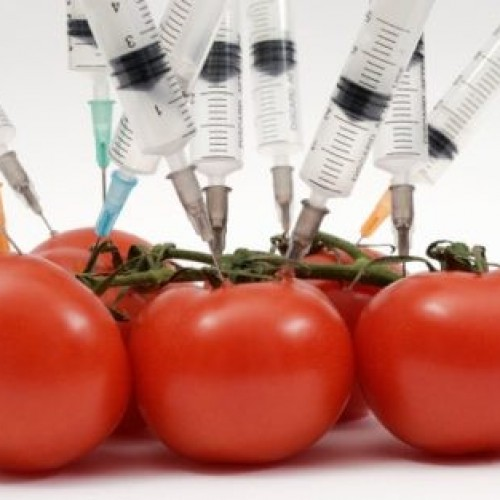 Why We Should Avoid Genetically Engineered Foods?