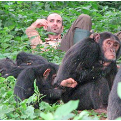 Getting To Know The Nomadic Chimps In Tanzania