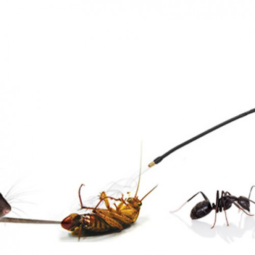 The Importance Of Taking Pest Control Services