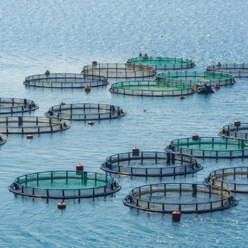 "Did You Know ""What Is Aquaculture"" ?"