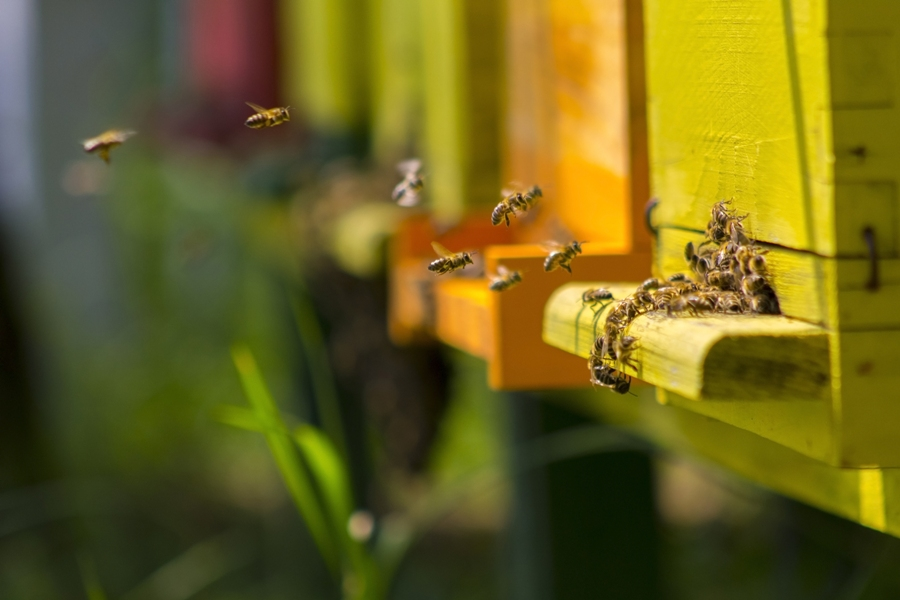 5 Quick Ways To Get Rid Of Bees