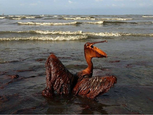 BP Gulf Oil Spill: Ecology, Life Science and Environment Lesson Plans To Teach Students About Oil Spill