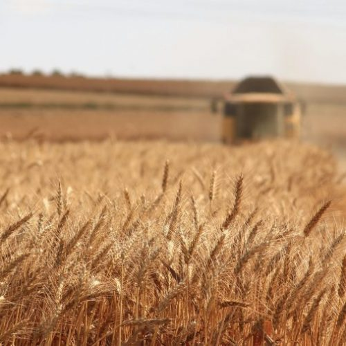What Can Improve Grain Milling For Rural and Low-Tech Farmers