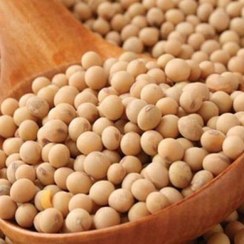 Healthy Soy Food Products